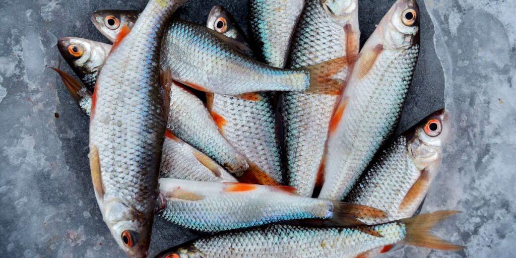Post mortem: Sådan bliver en død fisk til en frisk & levende oplevelse