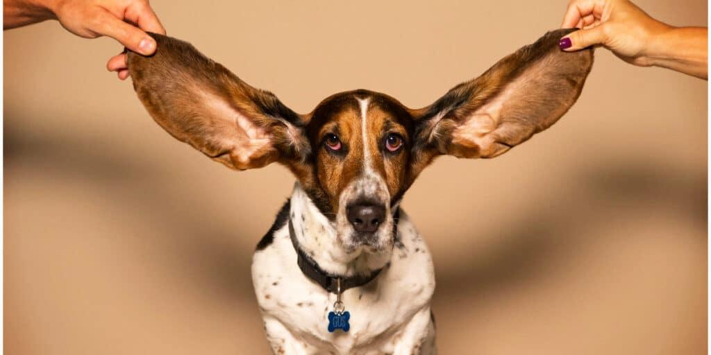 Grafisk facilitering – en metode til at lytte ind og lytte koncentreret