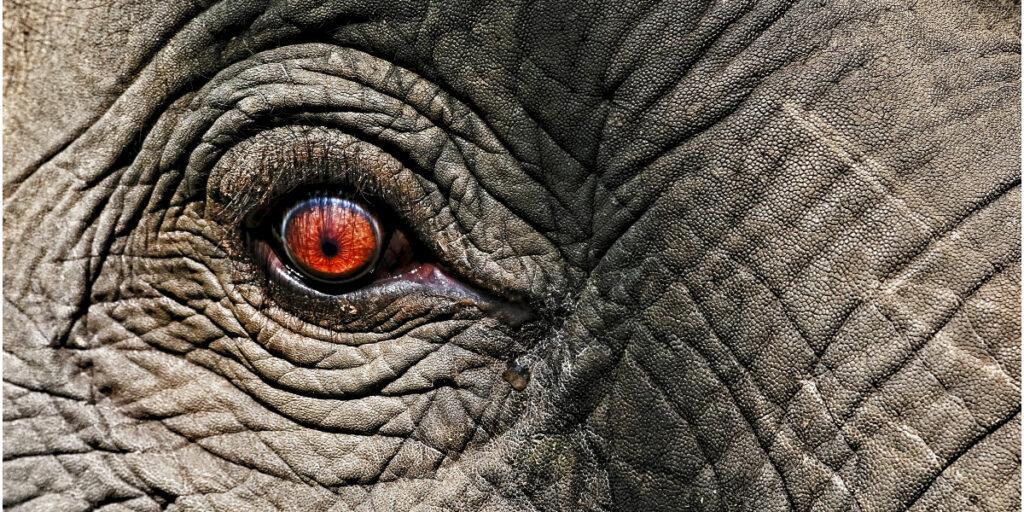 Hvem fanger elefanten i rummet?