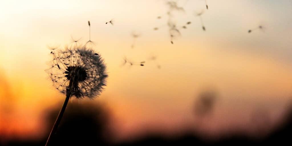 Hvordan puster metaforer liv i din fortælling